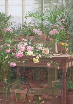 Edith White - Roses in the Sunroom